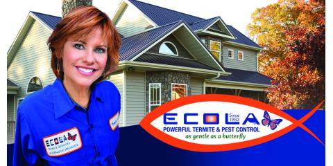 4 Termite Prevention Tips to Protect Your California Home, San Fernando Valley, California
