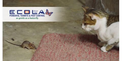 Giving Winter Pests and Termites the Cold Shoulder, San Diego, California