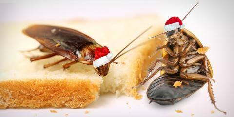 Ecola's December Holiday Savings Specials:, San Diego, California