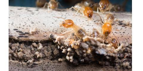 3 Signs You Need a Termite Inspection, Orcutt, California