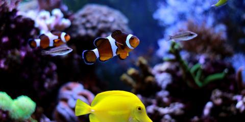 How Should You Move an Aquarium?, Ashwaubenon, Wisconsin