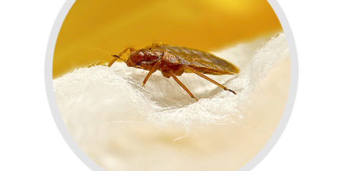 Let Eco-Therm Provide a Treatment for Bed Bugs After Holiday Guests Depart, Newberry, Ohio