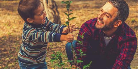 3 Reasons to Plant Trees for Summer Shade in Fall, Greensboro, North Carolina
