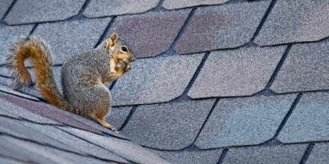 4 Signs It's Time for a Roof Replacement, 7, Maryland