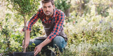 When & How to Stake a Tree, Glen Carbon, Illinois