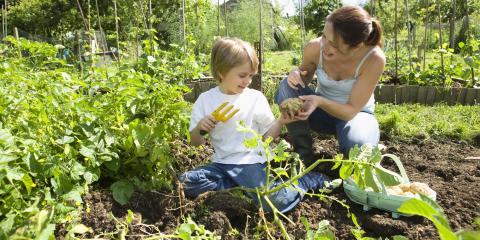 3 Tips for Growing Vegetables In Your Yard, Elberta, Alabama
