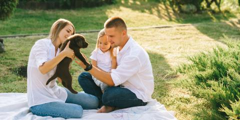 Why You Should Choose a Professionally-Installed Electric Dog Fence, Elizabethtown, Kentucky