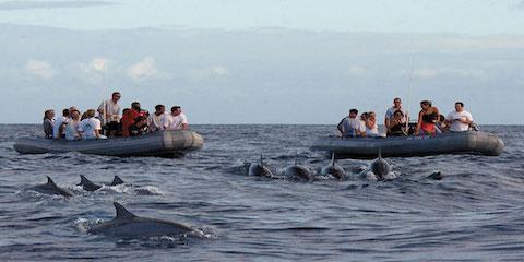 What to Expect on a Dolphin Watching Tour, Kekaha-Waimea, Hawaii