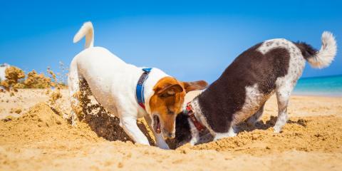 4 FAQ About Your Dog's Risk of Sun Overexposure, Elizabethtown, Kentucky