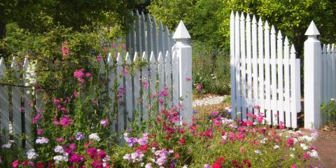 How to Choose the Best Vines for Your Fence, Elko, Nevada