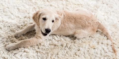Carpet Cleaning Tips for Pet Urine Contamination, Elko, Nevada