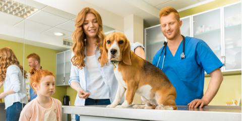 A Guide to Pet Microchipping, Elkton, Maryland