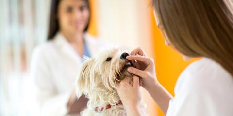 3 Common Dental Issues in Dogs, Elkton, Maryland