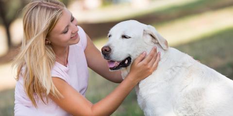 5 Tips to Prevent Arthritis in Dogs, Elyria, Ohio