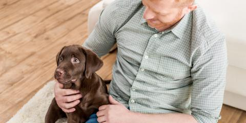 4 Tips for Housetraining a Puppy, Elyria, Ohio