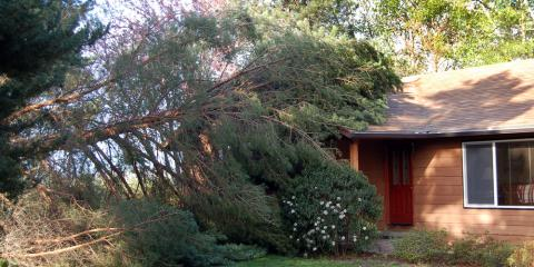 What To Do When You Need Emergency Tree Service, Milton, Pennsylvania