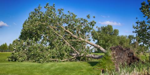 5 Telltale Signs You Need Emergency Tree Service, Carter, Arkansas