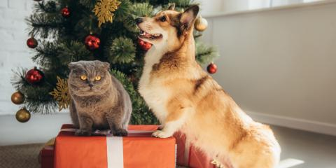 5 Foods to Keep Away From Pets Over the Holidays, Batavia, Ohio