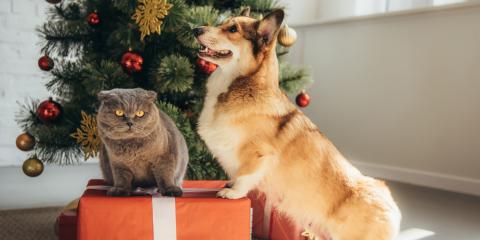 3 Holiday Decorations That Could Be Dangerous For Your Pets, Enterprise, Alabama