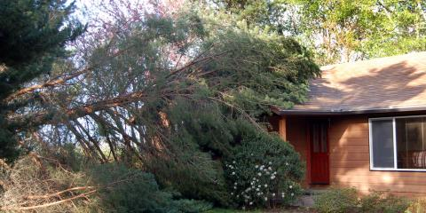 3 Steps to Take When You Need Emergency Tree Service, High Point, North Carolina