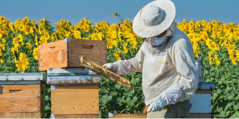 Why Choose Bee Removal Instead of Extermination?, Englewood, Ohio