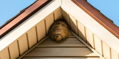 How to Prevent a Wasp Infestation, Englewood, Ohio
