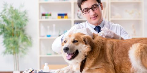 5 Animal Vaccines Your Dog Needs, Enterprise, Alabama