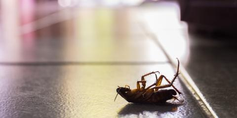 4 Key Ways to Prevent a Roach Infestation in Your Home, Enterprise, Alabama