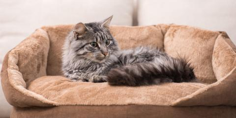 6 Home Pet Care Tips for Your Cat , Enterprise, Alabama