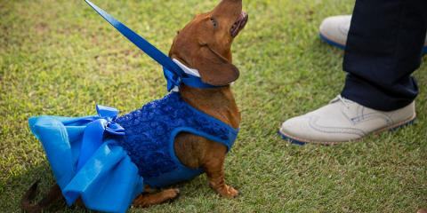 How to Include Your Dog in Your Wedding, Kahului, Hawaii