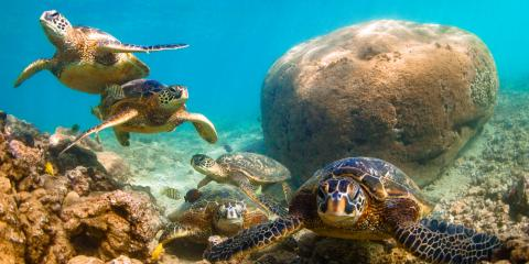 4 Aquatic Animals You May See While Exploring Oahu, Waianae, Hawaii
