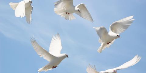 3 Reasons to Include a Dove Release in a Memorial Service, Covington, Kentucky