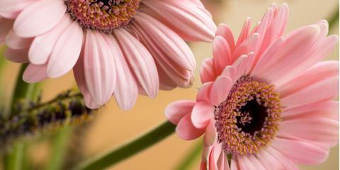 Local Erlanger Florist Shares the Meaning Behind April Birthday Flowers, Erlanger, Kentucky