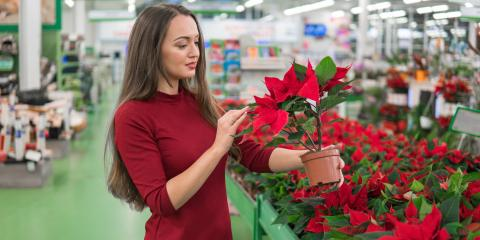 3 Tips for Caring For a Poinsettia, Erlanger, Kentucky