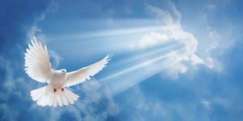 Lay Your Loved One to Rest With a White Dove Release, Covington, Kentucky