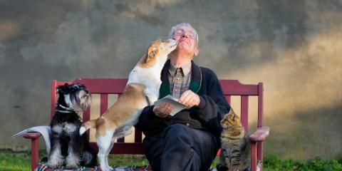 A Guide to Incorporating Pets Into Estate Planning, Wapakoneta, Ohio