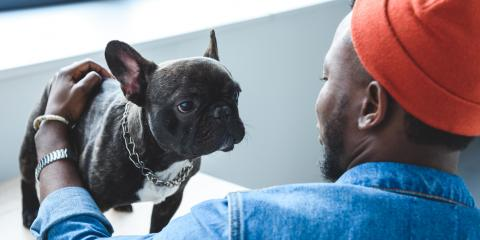 3 Tricks to Calm Your Dog's Nerves Before Going on Vacation, Churchville, New York