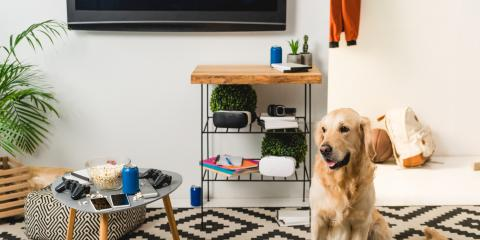 3 Tips for Pet-Proofing Home Electrical Installations, Ewa, Hawaii