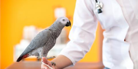 3 Reasons to Visit the Veterinarian for Bird & Exotic Pet Care, East Buffalo, Pennsylvania
