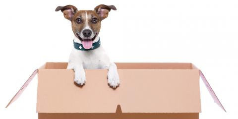 4 Tips on Moving with Pets From Hawaii's Best Moving Company, Ewa, Hawaii