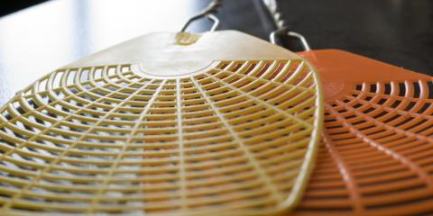 The Differences Between House Flies & Fruit Flies, Eagan, Minnesota