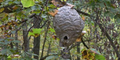 $ 10 Off Yellow Jacket/Hornet Nest Service, Port Orchard, Washington