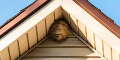 4 Key Differences Between Bees and Wasps, China Grove, North Carolina