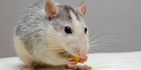 5 Easy Pest Control Tips to Keep Your Home Critter-Free, Sevierville, Tennessee