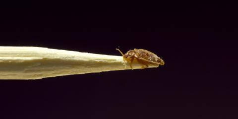 3 Ways to Avoid Bedbugs While Traveling, North Hempstead, New York