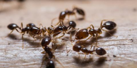 Try These 4 Ant Removal Tips Before Calling an Exterminator, Brookhaven, New York