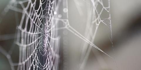 3 Signs You Have a Spider Problem in Your House, Cookeville, Tennessee