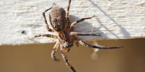 How to Identify Spider Bites, Cookeville, Tennessee