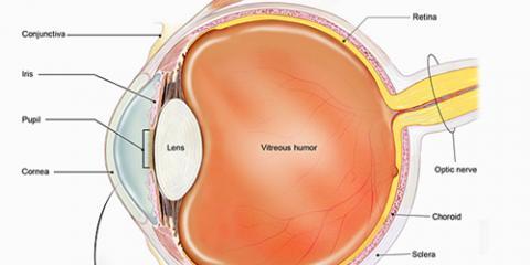 5 Facts About The Cornea From Lasik Eye Surgeon Sandra Belmont at Belmont Eye Center, Manhattan, New York