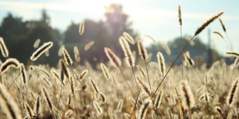 5 Tips for Coping With Autumn Allergies, Cold Spring, Kentucky